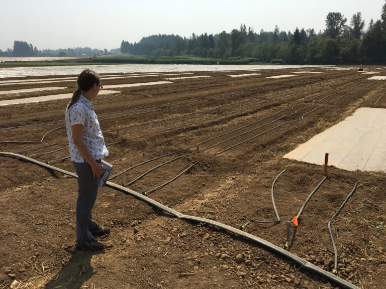 Soil Solarization  in the Pacific Northwest