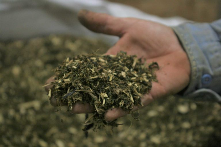 Drying and Processing Hemp