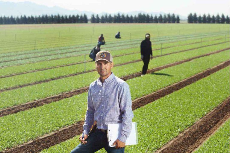 Managing Nutrition for Organic Vegetables