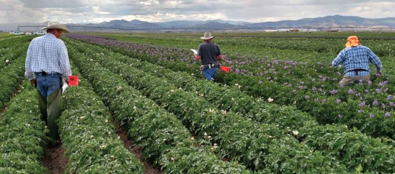 Rockey Farms Builds a Tradition of Sustainability