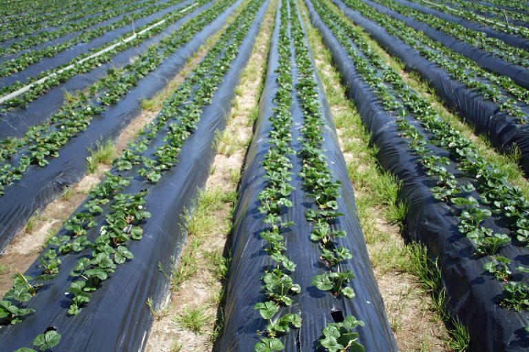 Private Grant Will Support New UC California Organic Institute