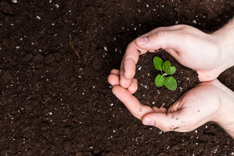 The Key to Optimum Soil and Plant Health: Giving Life to the Soil