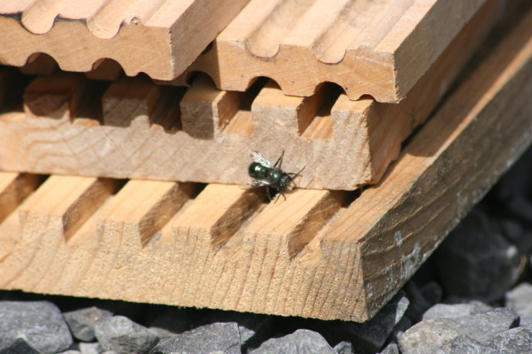 Pollinating Orchards and Berries with Mason Bees