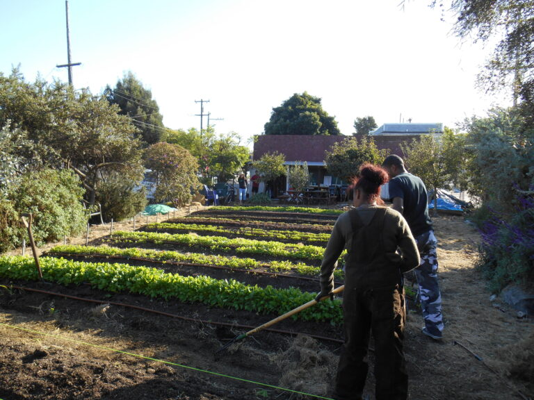 Food Safety Laws and Standard Operating Procedures for Urban Farmers