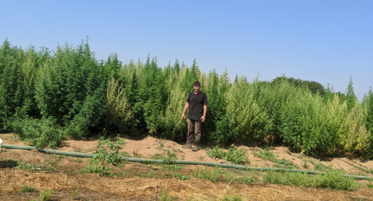 USDA Passes Final Rules on Hemp Growing