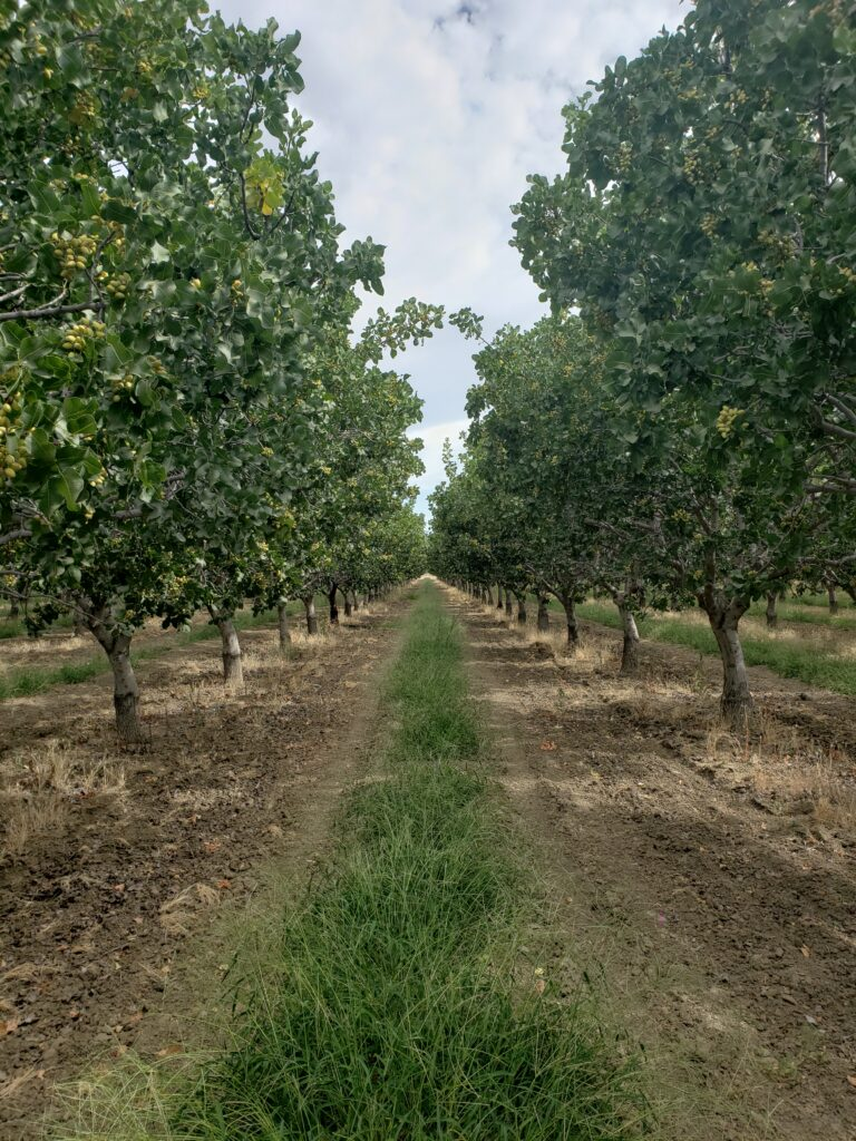 Soil Fertility Considerations for Growing Organic Tree Crops